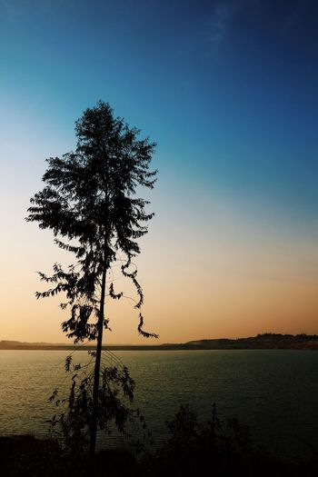 Silhouette tree by river against clear sky during sunset