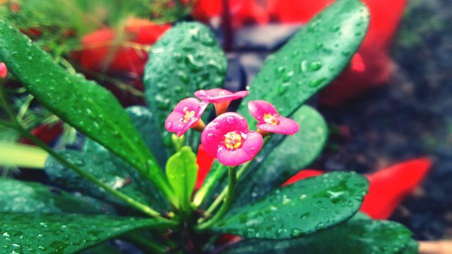 Flower from my garden First Eyeem Photo