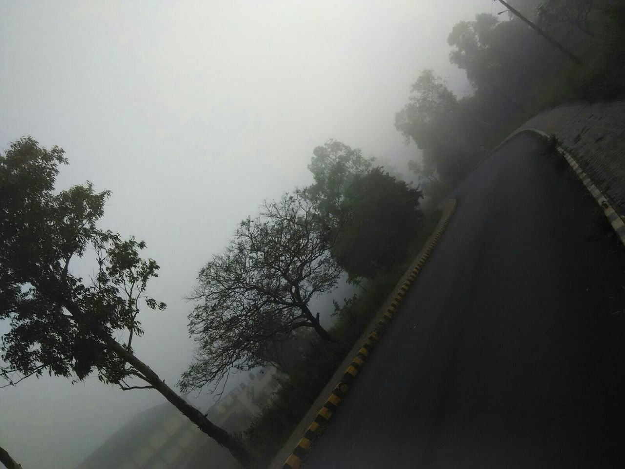 tree, transportation, nature, fog, no people, day, rail transportation, road, railroad track, outdoors, the way forward, beauty in nature, landscape, scenics, sky