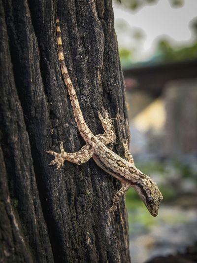 Scrimp, lizards, stripes, camouflage