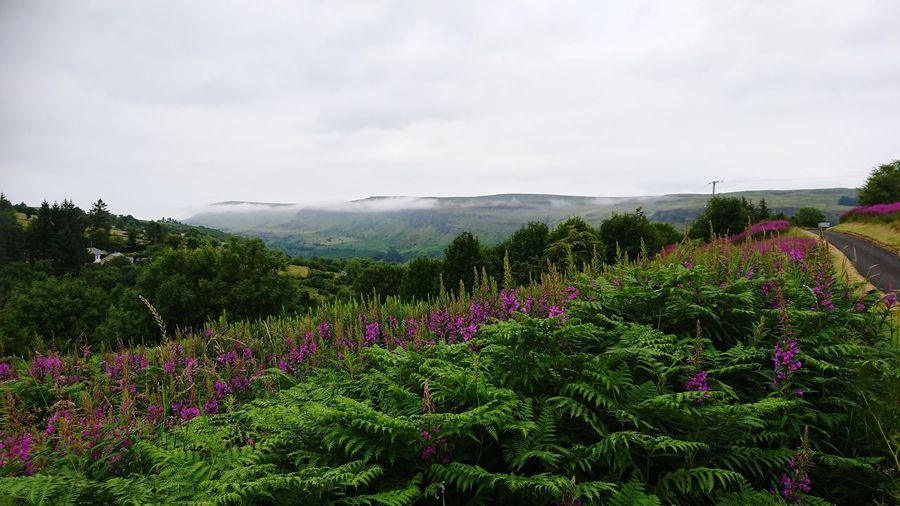 Sky forest Forest Northern Ireland Coastline Tranquility Beauty In Nature Green Gorgeous Skyline Mountain View Flower Head Flower Tree Rural Scene Multi Colored Field Purple In Bloom