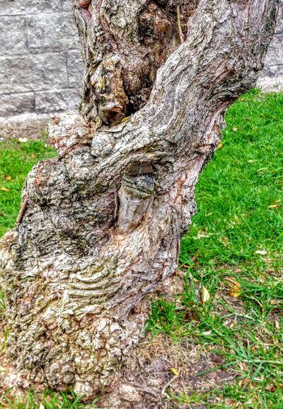 Tree Tree Trunk Textured  Close-up Grass