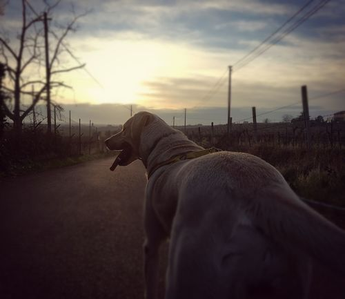 Sunset Sky Nature Outdoors Cloud - Sky Landscape Dog Pets Pet Photography  Dog Love