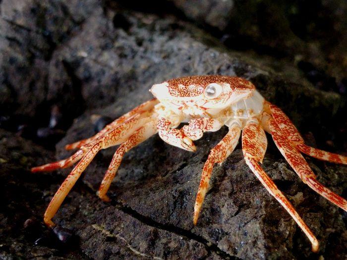Hanging Out Marine Biology Eyeemphotography Marinelife Eyeemaquatic Life Soaked And Stoked Searocks Seaside Hi! Crab