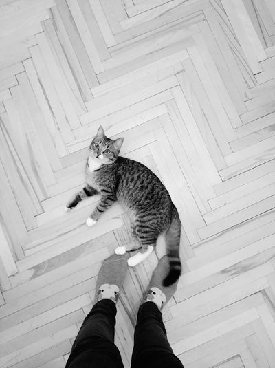 Low section of person standing by cat on hardwood floor