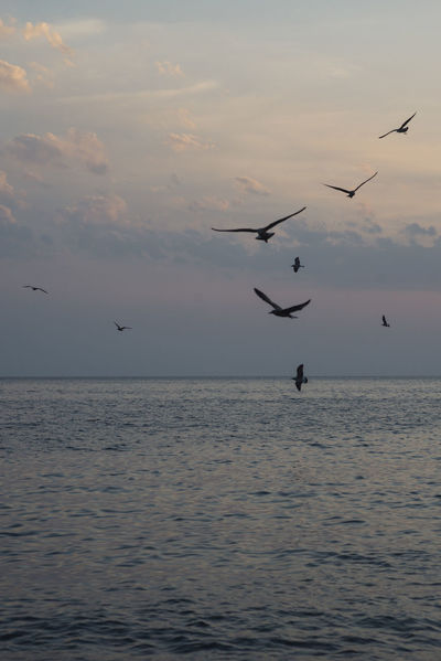 EyeEm Best Shots Animal Themes Animals In The Wild Beauty In Nature Bird Cloud - Sky Flock Of Birds Flying Horizon Over Water Large Group Of Animals Mid-air Motion Nature Outdoors Scenics Sea Sea Bird Silhouette Sky Spread Wings Sunset Tranquil Scene Tranquility Water Waterfront