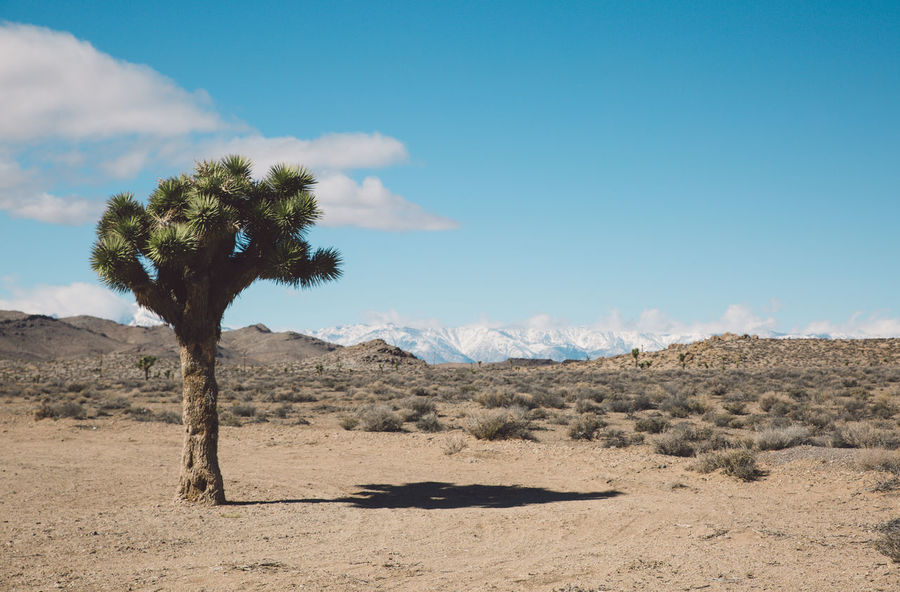 Arid Climate Arid Landscape Blue Sky Death Valley Death Valley National Park Desert Joshua Tree Landscape Mountains Nature Road Roadtrip The Great Outdoors - 2017 EyeEm Awards Lost In The Landscape California Dreamin