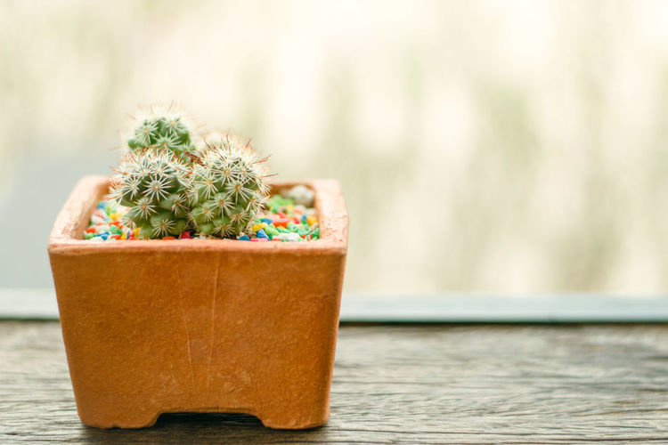 cactus beautiful and coppy space for background Beautiful Space Cactus Tree Table Close-up Plant Green Color Blooming