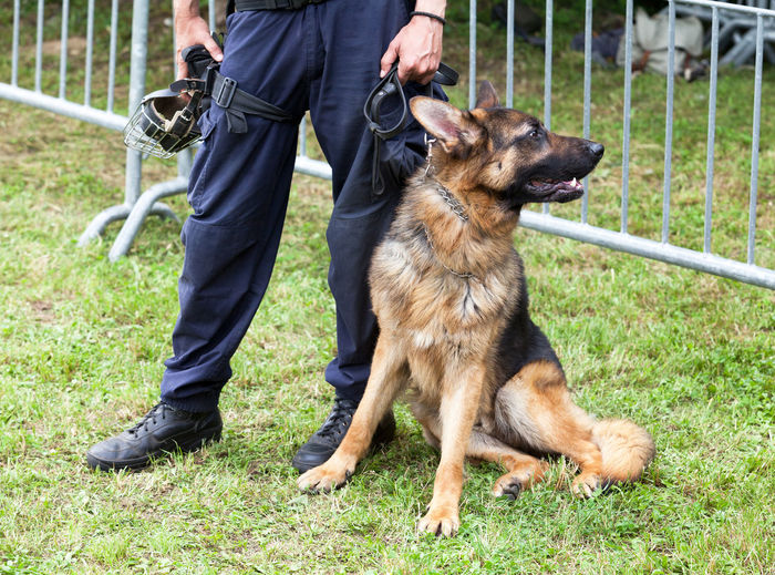 Low section of police officer standing with german shepherd on grassy field