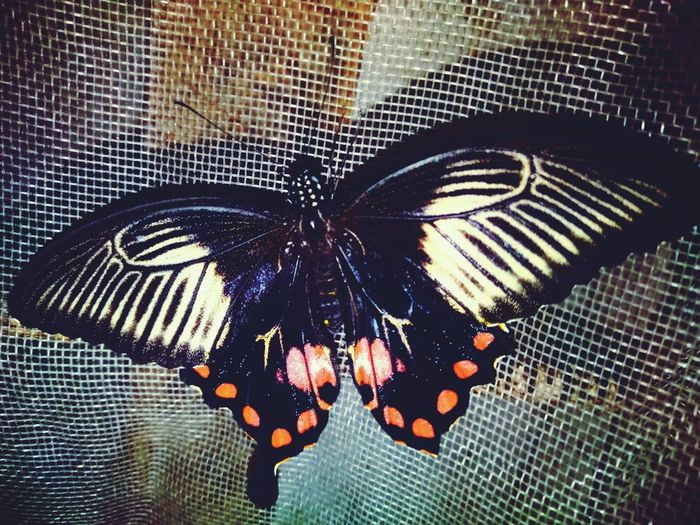 This butterfly