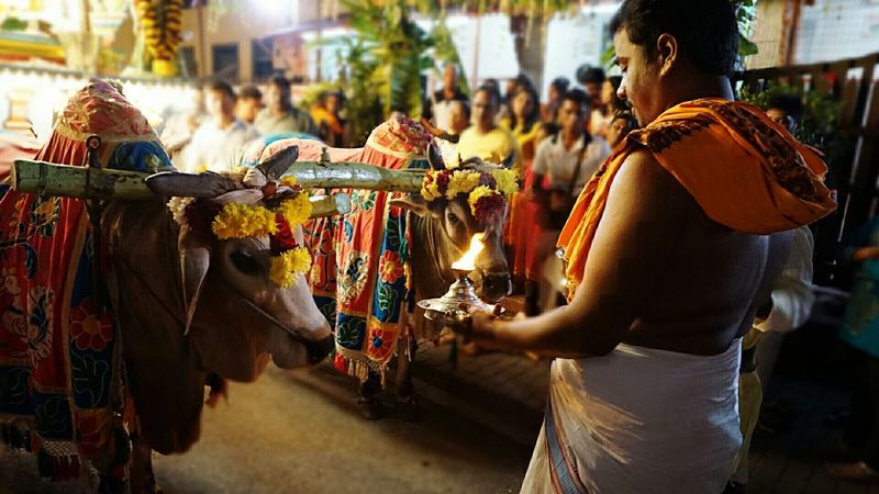 Cows and candles Rituals Temple ASIA The Traveler - 2015 EyeEm Awards