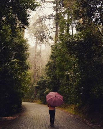 Rain Tree Protection Walking Wet Weather One Person Nature Only Women One Woman Only Outdoors RainDrop Water Lifestyles Real People Women Road Portugaldenorteasul Morningwalk Portugaldenorteaosul Florest Pathway Path In Nature Umbrella Rainy Days EyeEmNewHere The Traveler - 2018 EyeEm Awards
