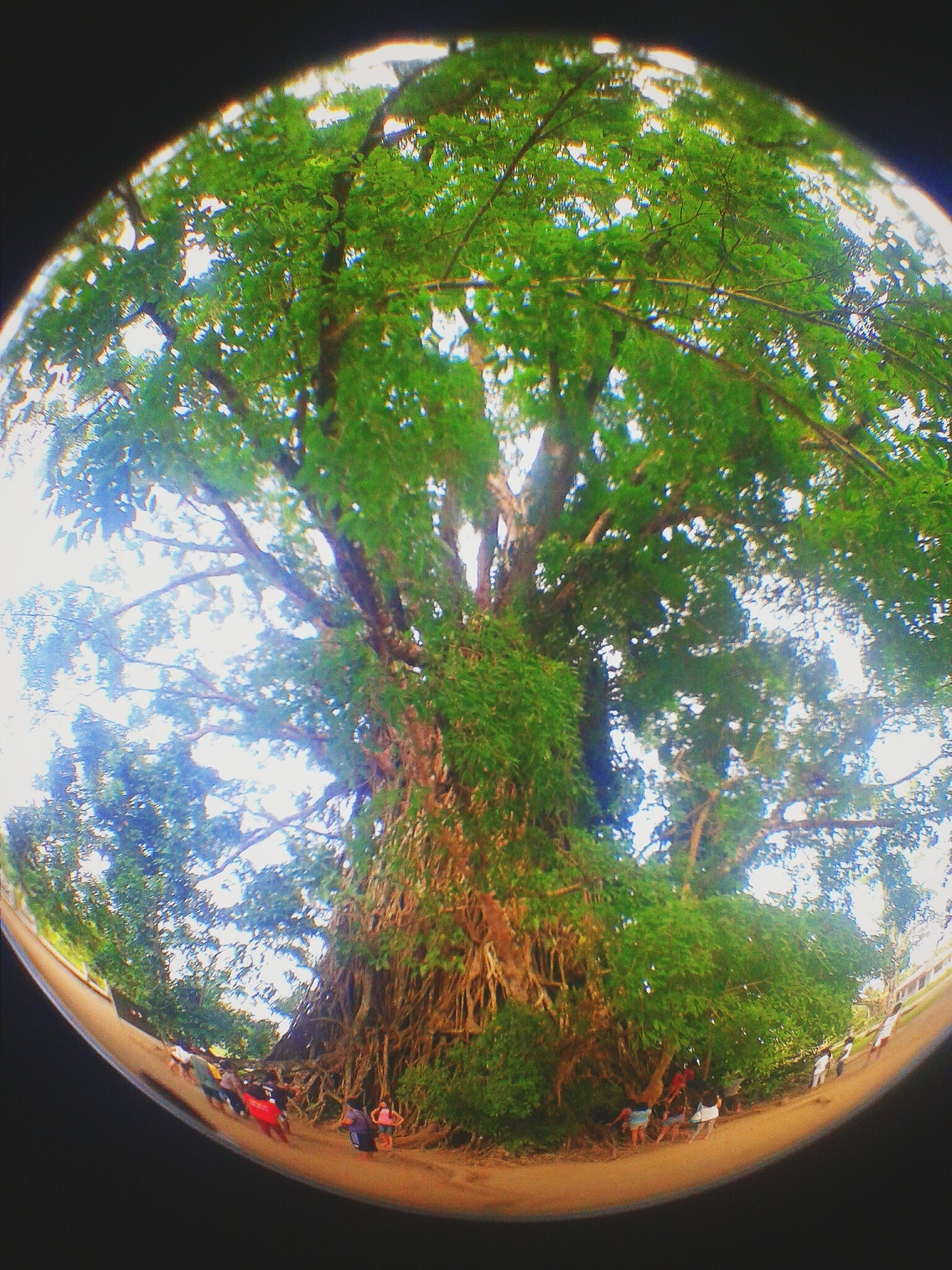 tree, indoors, growth, low angle view, green color, nature, branch, tranquility, no people, lush foliage, fish-eye lens, circle, beauty in nature, day, arch, sky, window, plant, leaf, transparent
