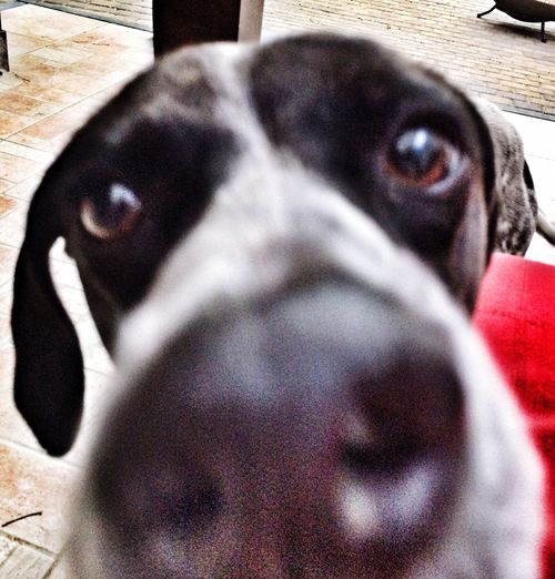 Dogs IPhone