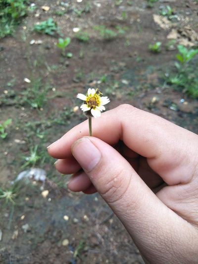 a small flower A Small Flower Flower Insect One Person Day Flower Head Nature