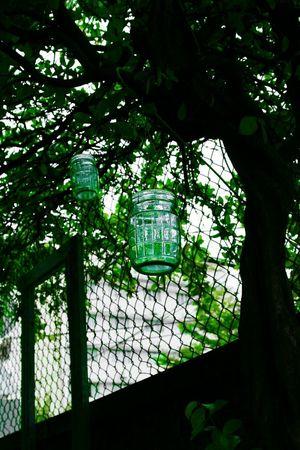 Mint By Motorola Green... Vietnam Vietnamese Nature Photography Trees Saigonstyle