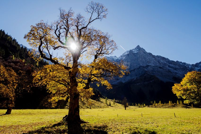 Fantastic autumn mood in the alps. 🍂 Autumn Tree Beauty In Nature Nature Mountain Tranquility Outdoors Landscape Sunlight No People Clear Sky