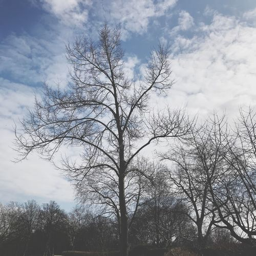 Just a tree Endofwinter Spring? Blue Sky Sexytree Tree Bare Tree Sky Nature Cloud - Sky Outdoors No People Beauty In Nature Day Low Angle View Forest Branch Tranquility Landscape Scenics