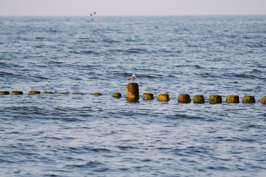 Gull Sea Bole Baltic Sea Sea And Sky Move