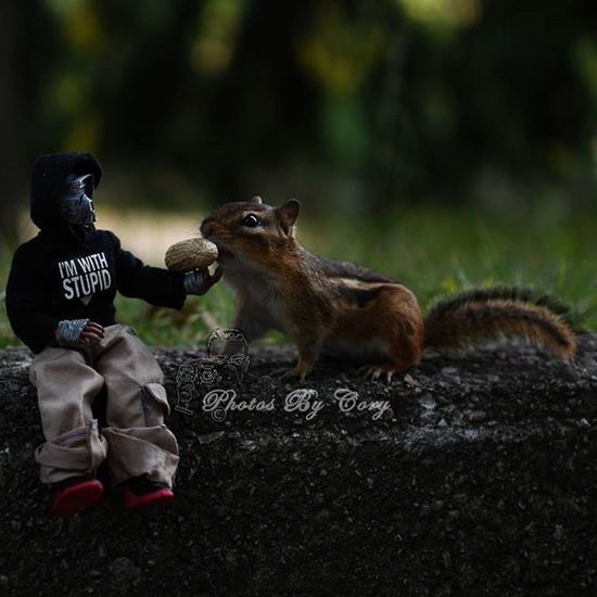 Jake F. Sithfarm wondered where the rest of the Rescue Rangers were. Itsjakefromsithfarm Krashes_502nd Krashes_kustoms Chipmunk Luckywiththeanimals Bikerscout Wildlife Animallover Wildlifephotography Wildlifepark Photooftheday Instadaily Instanature Natureshots Natureseeker Natureonly Natures_hub Natures_cuties Animallover Animal_captures Wildlife_perfection