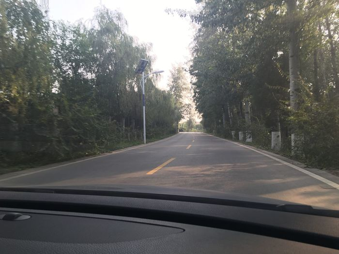 Country Road Countryside Day Diminishing Perspective Double Yellow Line Empty Empty Road Growth Journey Long Nature Outdoors Remote Road Solitude The Way Forward Tranquil Scene Tranquility Transportation Tree Tree Trunk Vanishing Point Windshield