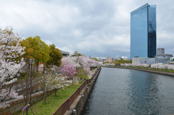 Sakura are blossoming all the way through Osaka. Architecture Building Exterior Built Structure City Cityscape Cloud - Sky Day Flower Modern Nature Outdoors River Scenics Sky Skyscraper Travel Destinations Tree