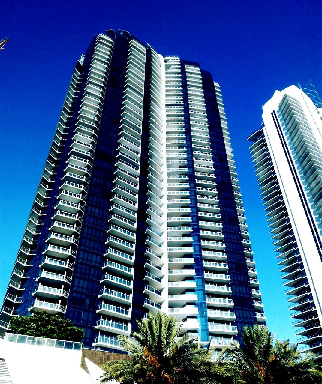 architecture, skyscraper, built structure, modern, building exterior, low angle view, blue, city, clear sky, sky, outdoors, no people, growth, tree, day, apartment