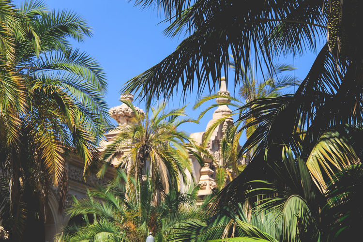Balboa Park Culture Garden Holiday Low Angle View Palm Tree Plant San Diego