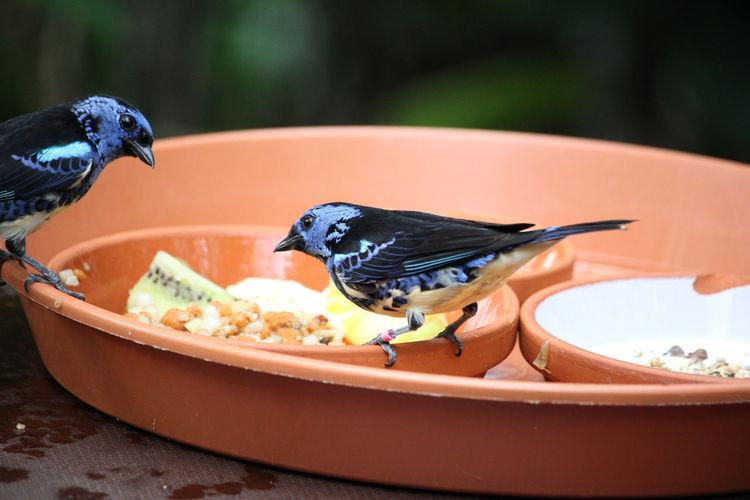 Close-up of bird eating food