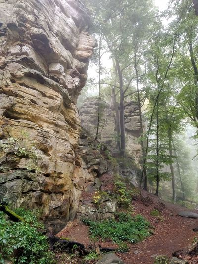 Low angle view of rocks in forest