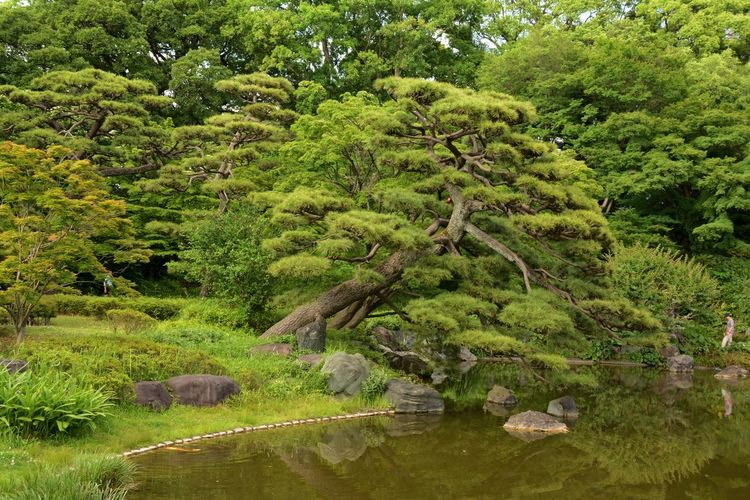Imperial Palace Garden Reflection Tokyo,Japan Beauty In Nature Day Forest Garden Photography Green Color Lake Nature Outdoors Tree Water