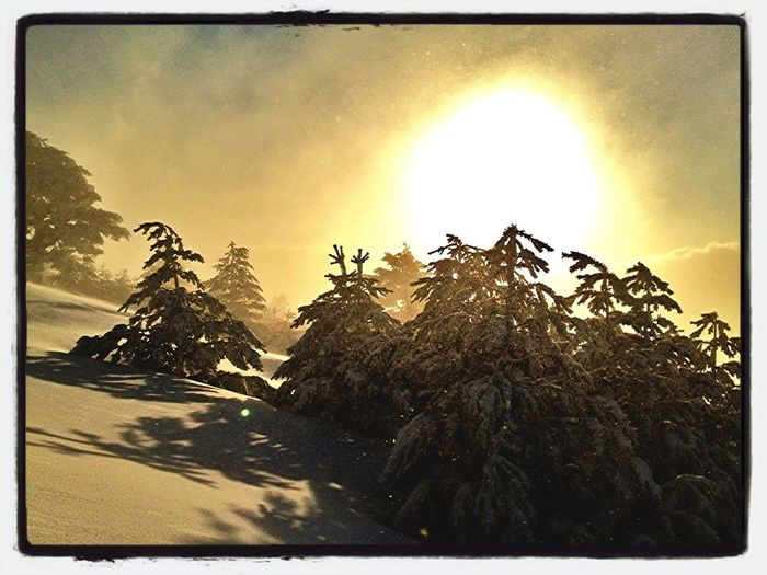 Entre Los árboles 2 #esquídemontaña #skimountaineering #training  #peñalara #windstorm #mountain #gasss #sunrise #amanecer #beforework #sinfiltros