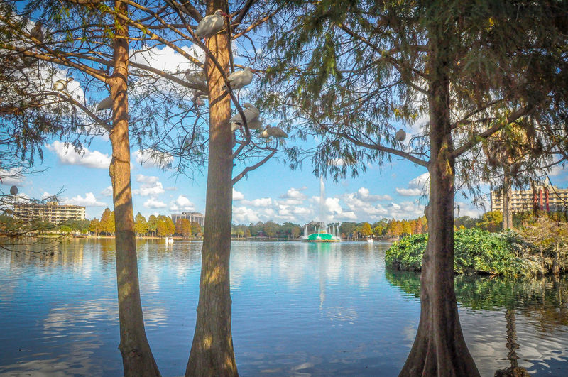Architecture Arrival Beauty In Nature Birds Bridge - Man Made Structure Business Finance And Industry City Day Fountain Ibis Lake Lake Eola Park Nature No People Orlando Florida Outdoors Politics And Government Reflection Reflection Lake Scenics Sky Travel Destinations Tree Water