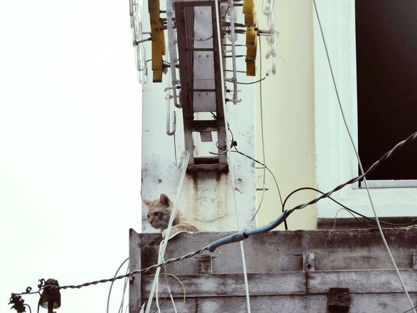 Coming out to play No People Outdoors Sky Day Cable EyeEmNewHere Building Exterior Architecture Cat Feline Animals Animal Themes Kitten Kittens Vietnam City Urban