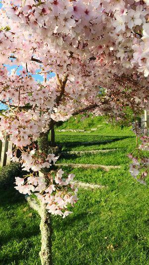 Walking into the spring garden. Springtime The Week On EyeEm Blossom