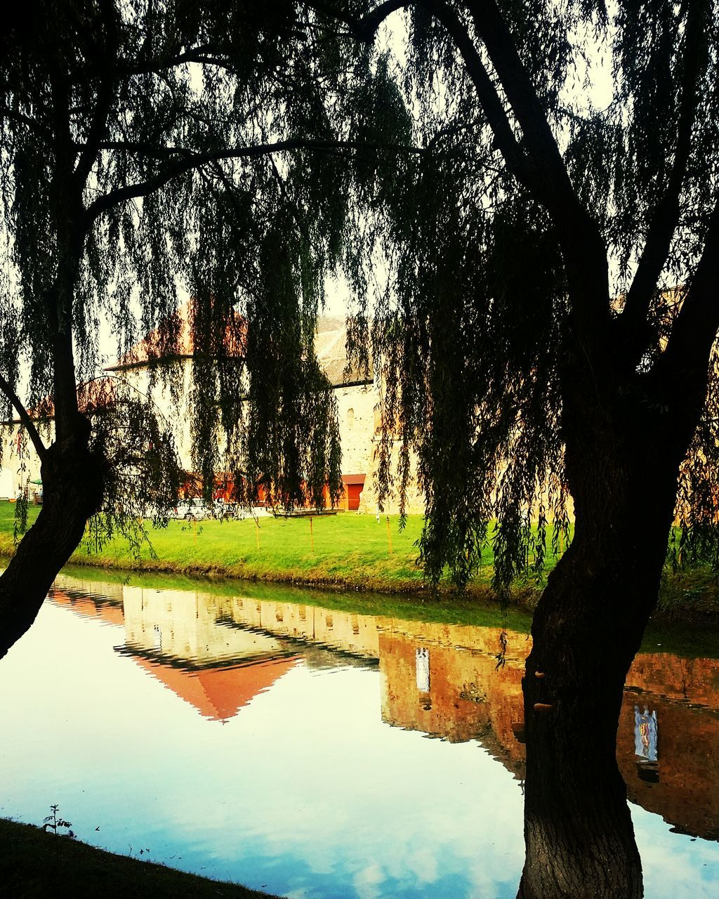tree, reflection, water, nature, tranquil scene, beauty in nature, tranquility, scenics, growth, outdoors, no people, day, branch, tree trunk, sky, grass