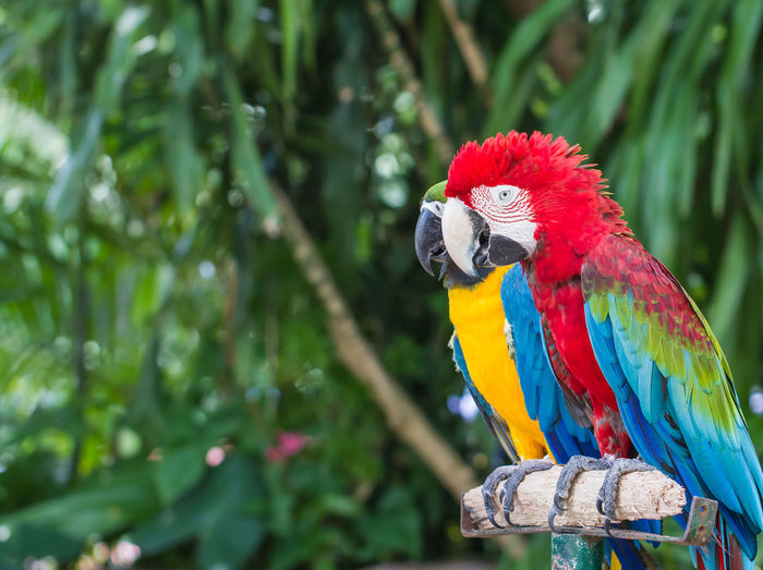 Portrait of colorful Scarlet Macaw parrot Animal Animal Themes Animal Wildlife Animals In The Wild Beak Bird Branch Close-up Day Focus On Foreground Macaw Multi Colored Nature Parrot Perching Plant Scarlet Macaw Tree Vertebrate