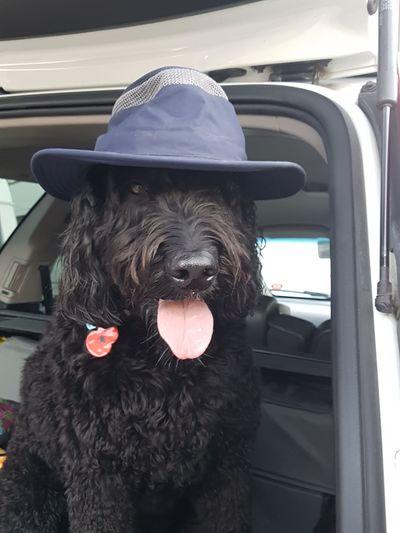 Tilley hat for