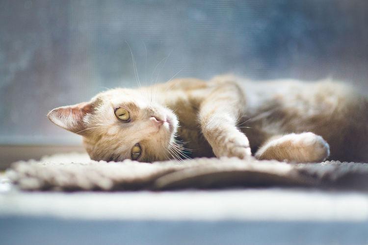 Portrait of cat resting on doormat