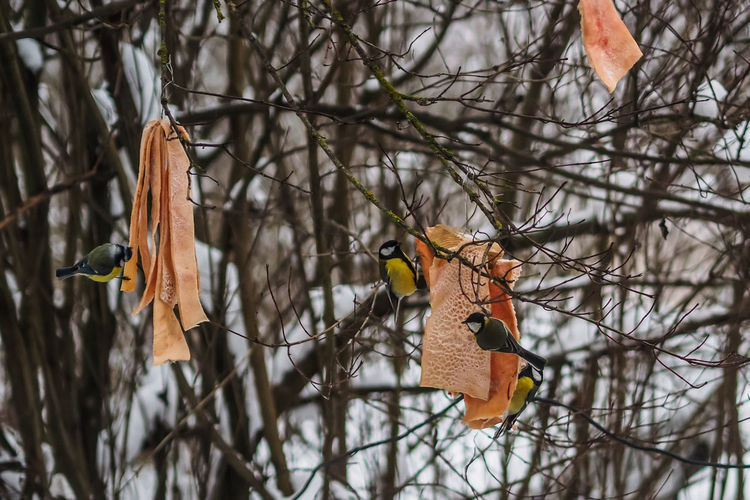 Birds perching on bare tree