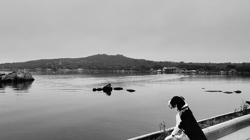 Dog My Dog Pets Uga  Scape_collection Sea Scape Dogo Aleman Gran Danes Great Dane Black And White Black & White Monochrome I Love Animals Calm Water The KIOMI Collection
