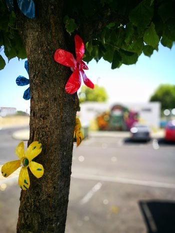 Plastic flowers Day Outdoors Flower Close-up Tree Sky Plastic Flowers EyeEmNewHere HuaweiP9 HuaweiP9Photography Huaweiphotography