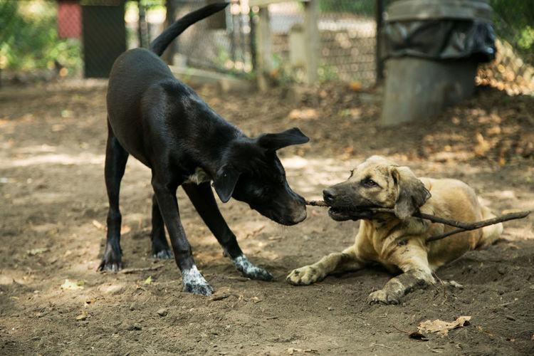 Dogs dog