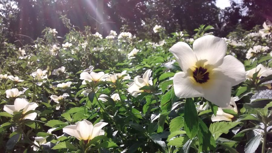 EyeEm Best Shots - Nature Flowers Flower Collection EyeEm Nature Lover
