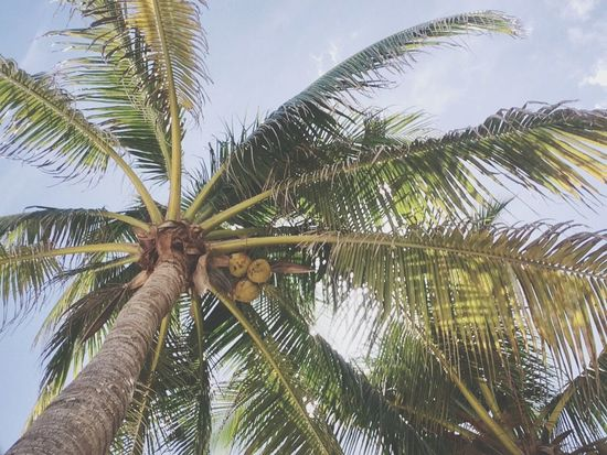 Akumal Quintana Roo Beautiful Blue Sky Mexico Freshness
