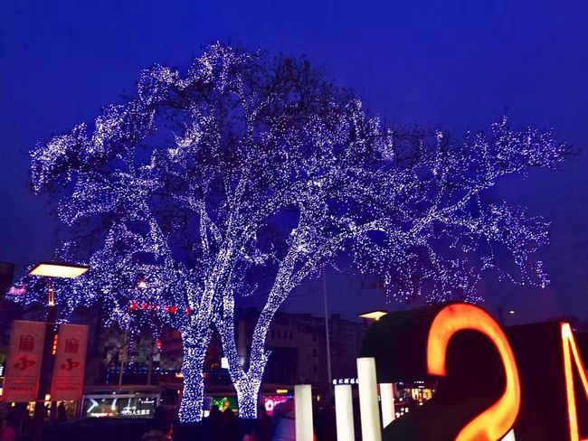 night Night Illuminated Tree Christmas Purple Christmas Lights No People Low Angle View Outdoors Christmas Decoration Architecture Building Exterior Sky Flower Nature Beauty In Nature
