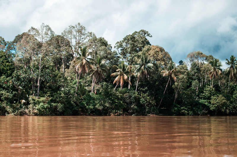 ASIA Borneo Palm Tree Riverside Adventure Animal Wildlife Beauty In Nature Cloud - Sky Coconut Palm Tree Day Forest Growth Jungle Land Nature No People Outdoors Plant Reflection River Sky Tranquil Scene Tranquility Tree Water