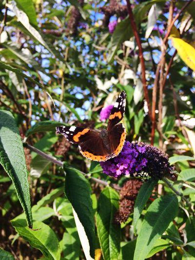Butterfly Sun ☀ Garden Flowers OpenEdit Popular Photos