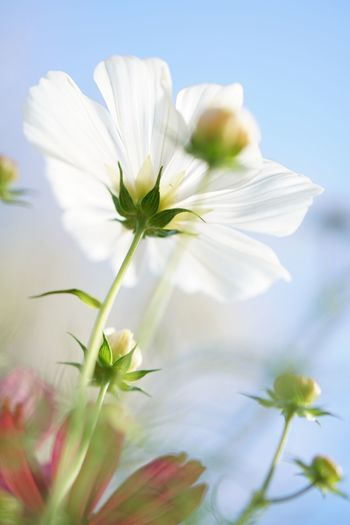 Sky Nature Petal Flower Freshness Growth Outdoors Fragility EyeEm Nature Lover Greenery White Color