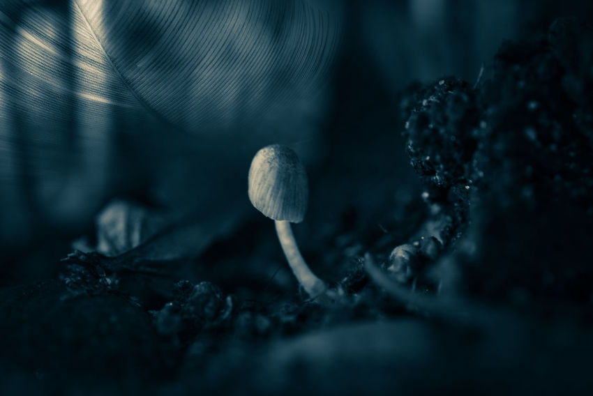 just a save place 😍 https://youtu.be/gA-NDZb29I4 My Favourite Photo Monochrome Mushroom Fungus Nature No People Close-up Toadstool Fragility Beauty In Nature Day Outdoors Freshness Selective Focus Growth Fly Agaric